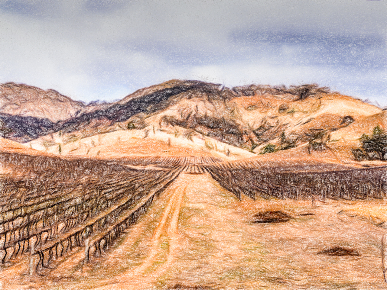 A painterly photo of vineyards set in hills.